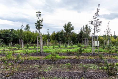 Výzkumný projekt: V Ostravě byly vysázeny stovky stromů